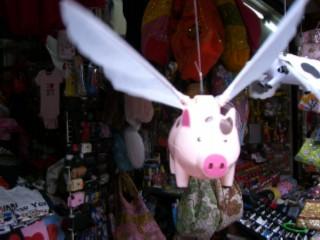 Flying pig 03